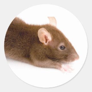 Brown Rat Sticker