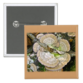 Brown rayó artículos de los hongos de estante pin cuadrado