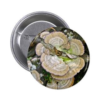 Brown rayó artículos de los hongos de estante pin redondo de 2 pulgadas