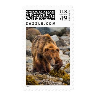 Brown refiere la playa 3 sellos