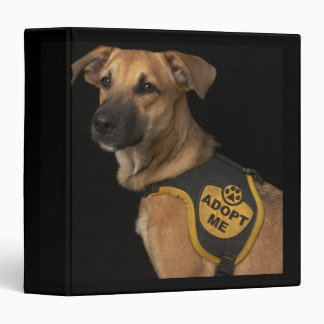Brown rescue dog with adopt me vest binder