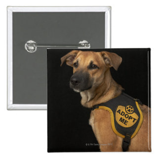 Brown rescue dog with adopt me vest button