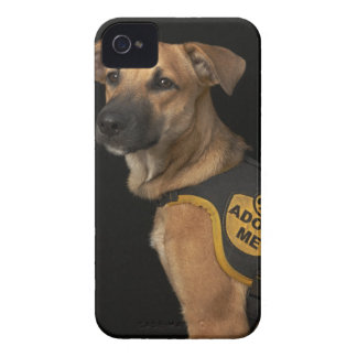 Brown rescue dog with adopt me vest iPhone 4 cover