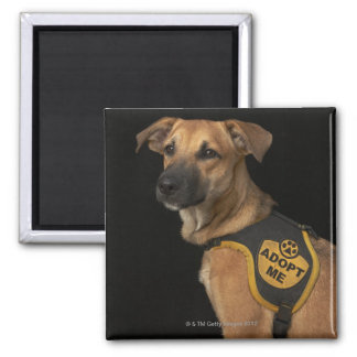 Brown rescue dog with adopt me vest magnet