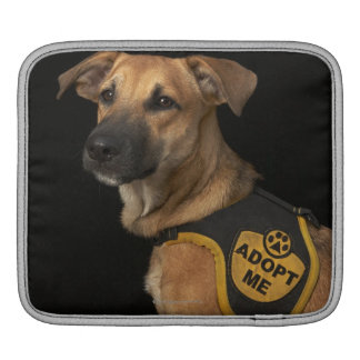 Brown rescue dog with adopt me vest sleeve for iPads