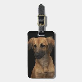 Brown resuce dog with black nose on black bag tag
