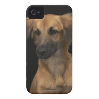 Brown resuce dog with black nose on black Case-Mate iPhone 4 case