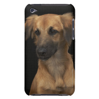 Brown resuce dog with black nose on black Case-Mate iPod touch case