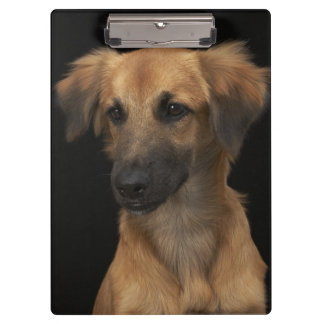 Brown resuce dog with black nose on black clipboard