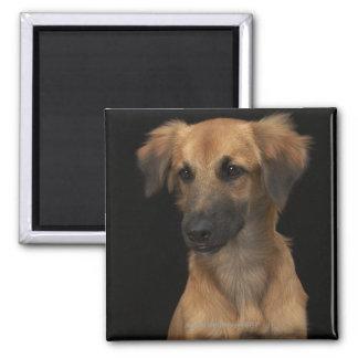 Brown resuce dog with black nose on black magnet