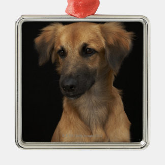 Brown resuce dog with black nose on black metal ornament