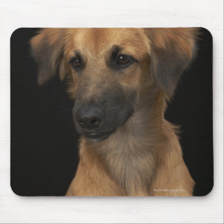 Brown resuce dog with black nose on black mouse pad