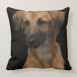 Brown resuce dog with black nose on black pillow