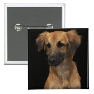 Brown resuce dog with black nose on black pinback button