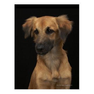 Brown resuce dog with black nose on black postcard
