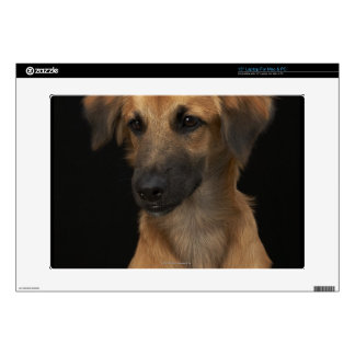 "Brown resuce dog with black nose on black skin for 15"" laptop"