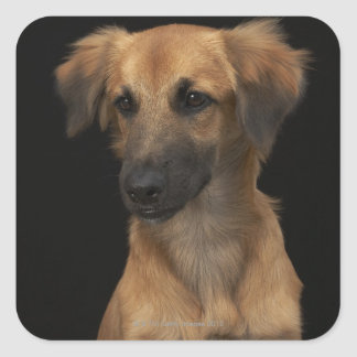 Brown resuce dog with black nose on black square sticker