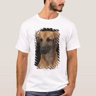 Brown resuce dog with black nose on black T-Shirt