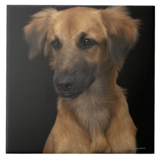 Brown resuce dog with black nose on black ceramic tiles