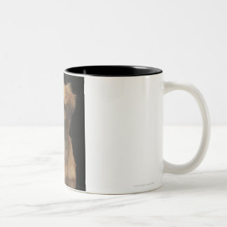 Brown resuce dog with black nose on black Two-Tone coffee mug