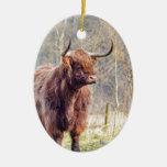 Brown scottish highlander cow standing in spring ceramic ornament