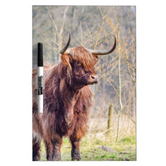 Brown scottish highlander cow standing in spring Dry-Erase board