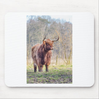 Brown scottish highlander cow standing in spring mouse pad