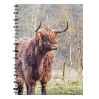 Brown scottish highlander cow standing in spring notebook