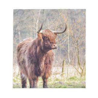 Brown scottish highlander cow standing in spring notepad