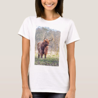 Brown scottish highlander cow standing in spring T-Shirt