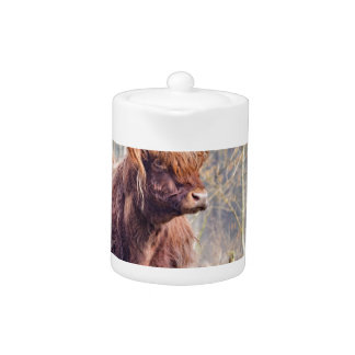 Brown scottish highlander cow standing in spring teapot