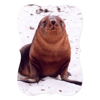Brown Seal With Flipper Feet Looks At Camera 5x7 Paper Invitation Card