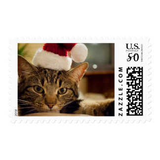 Brown short-haired tabby cat postage