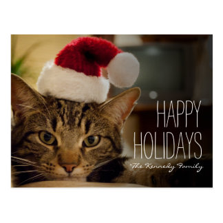 Brown short-haired tabby cat postcard