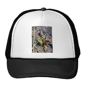 Brown Skunk Cabbage (Symplocarpus Foetidus) flower Mesh Hat