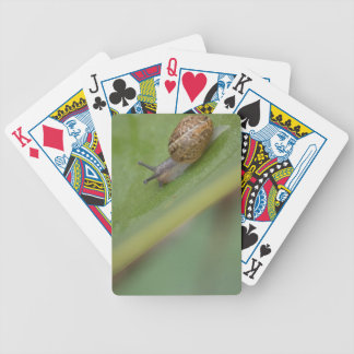 Brown snail on dew covered leaf bicycle playing cards