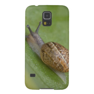 Brown snail on dew covered leaf galaxy s5 cover