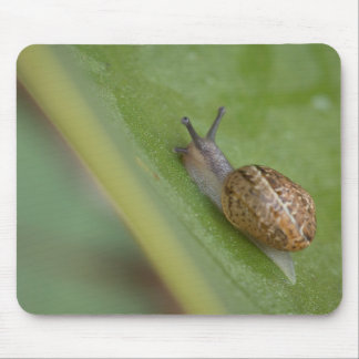 Brown snail on dew covered leaf mouse pad