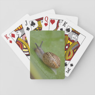 Brown snail on dew covered leaf playing cards