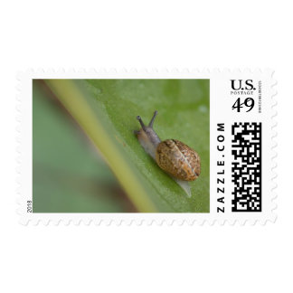 Brown snail on dew covered leaf postage stamps