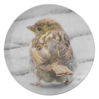 Brown Sparrow Party Plate