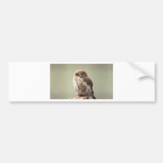 Brown Speckled Owl Bumper Sticker