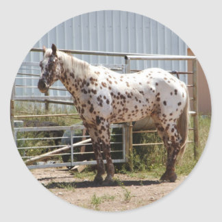 Brown spotted Appaloosa horse Classic Round Sticker