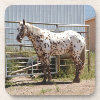 Brown spotted appaloosa horse coasters