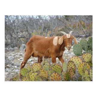 Brown spotted goat postcard