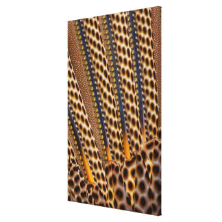 Brown spotted pheasant feather canvas print
