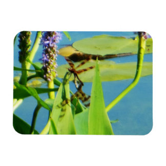 Brown Spotted Yellow Wing Dragonflies Magnet
