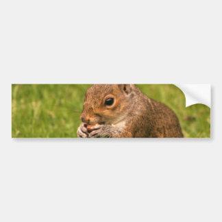 Brown Squirrel Bumper Sticker