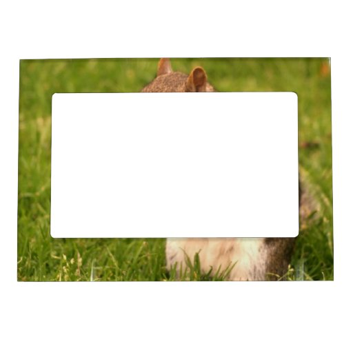 Brown Squirrel Magnetic Frame