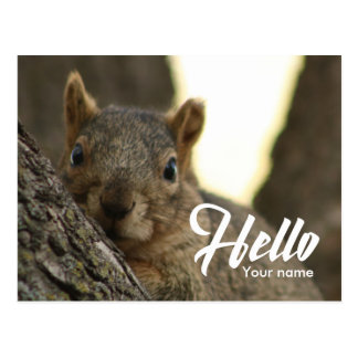 Brown squirrel photo funny cute hello postcard
